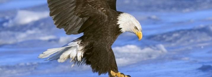 Analises Eagle Fly